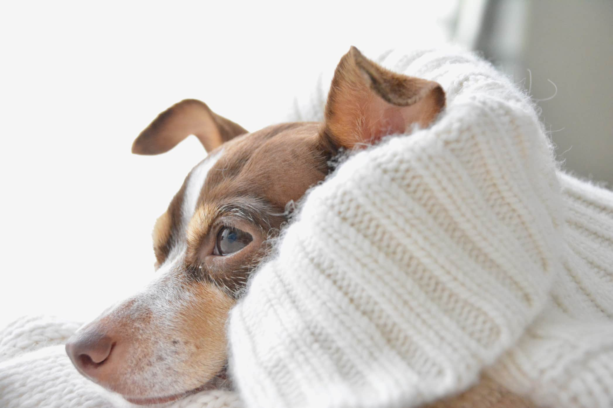 DOGS Archives - Dandelion Chandelier