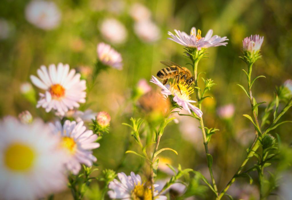 Best Gourmet Artisanal Luxury Honey Brands