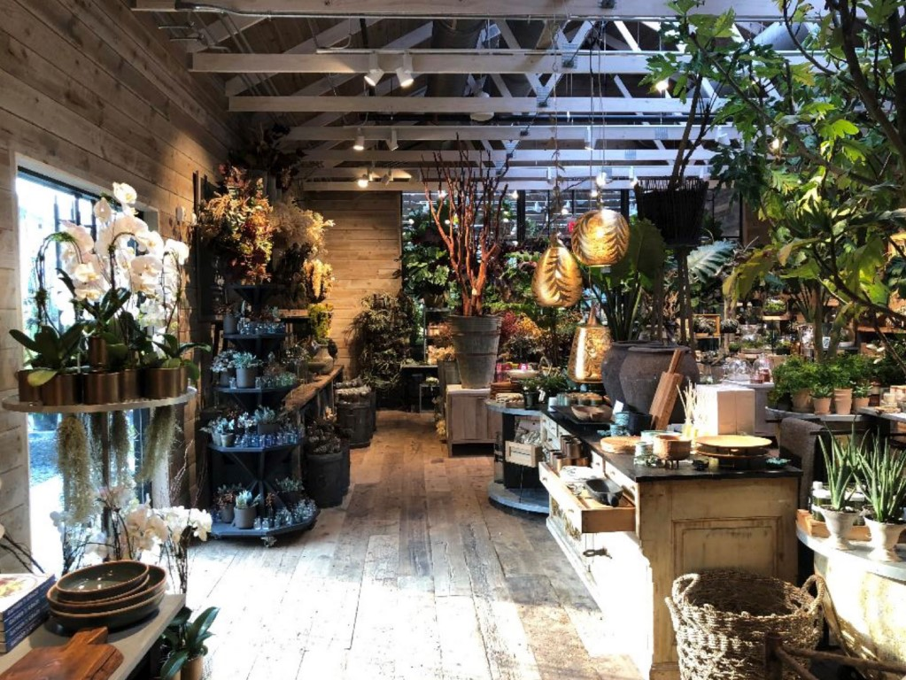 the best places to buy indoor house plants online sites or in retail stores
