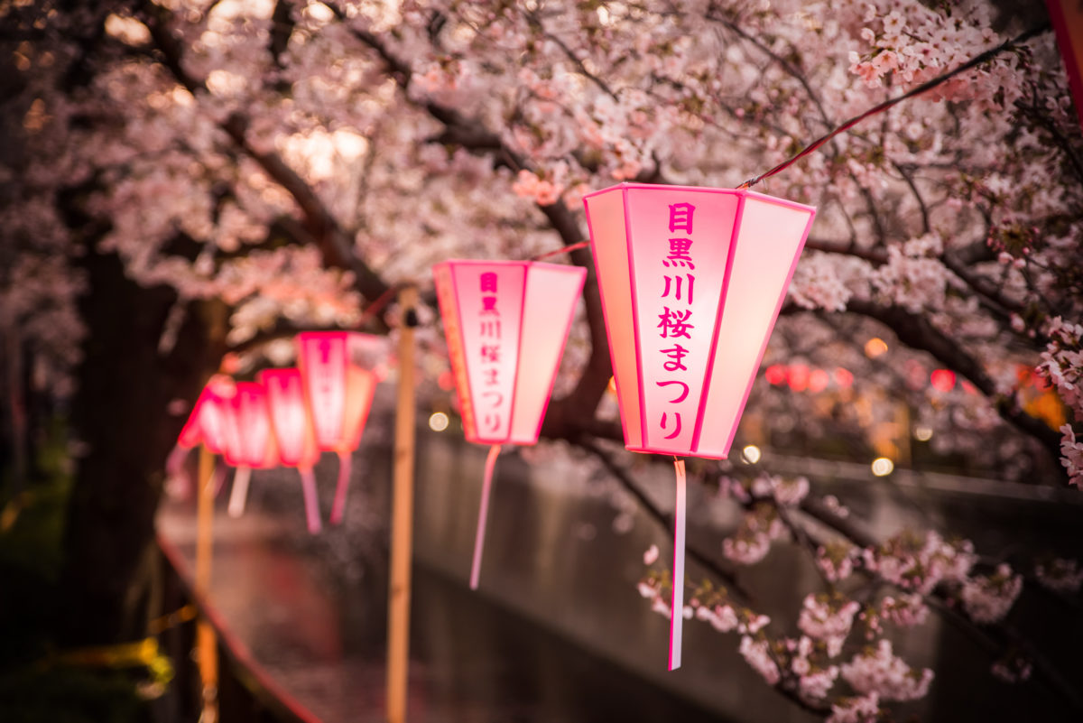the best luxury destinations to see the spring cherry blossoms and sakura