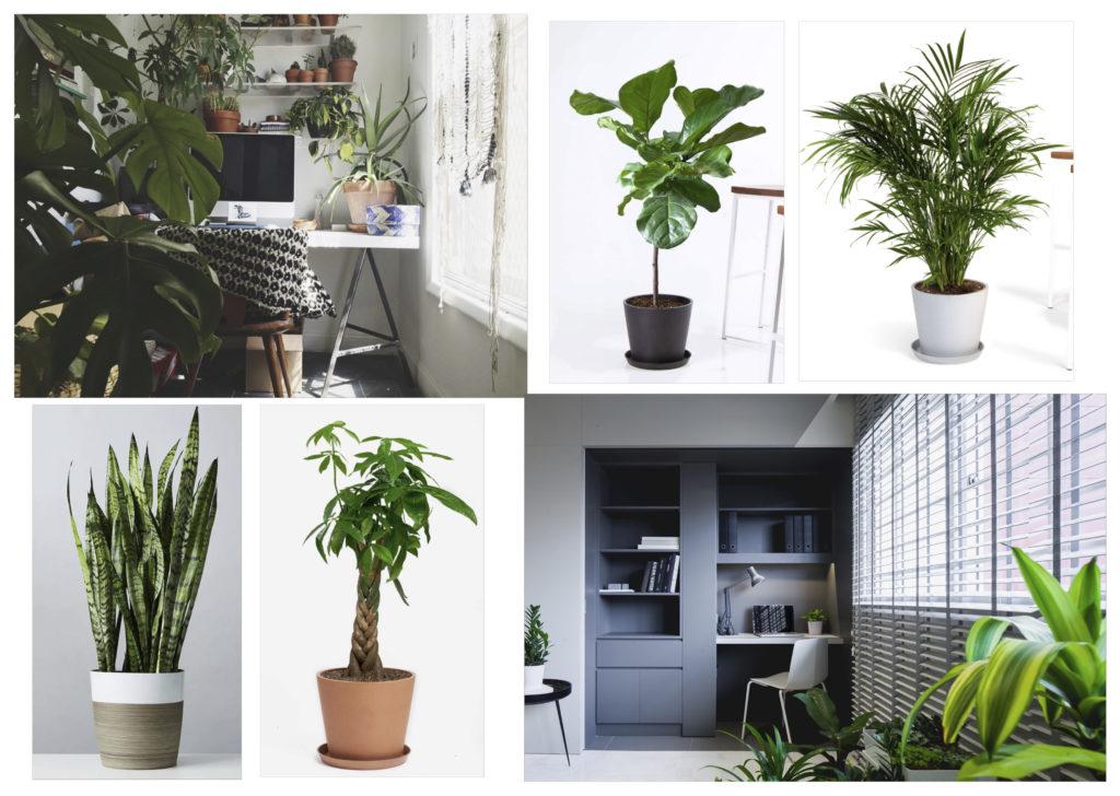 best luxury home office plants
