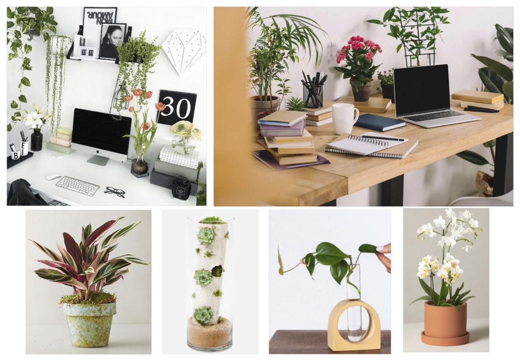 types of best indoor plants