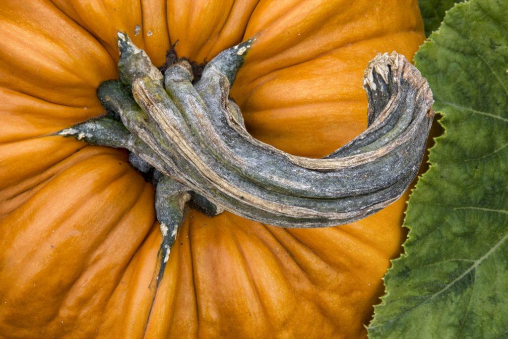 where to go pumpkin-picking this fall