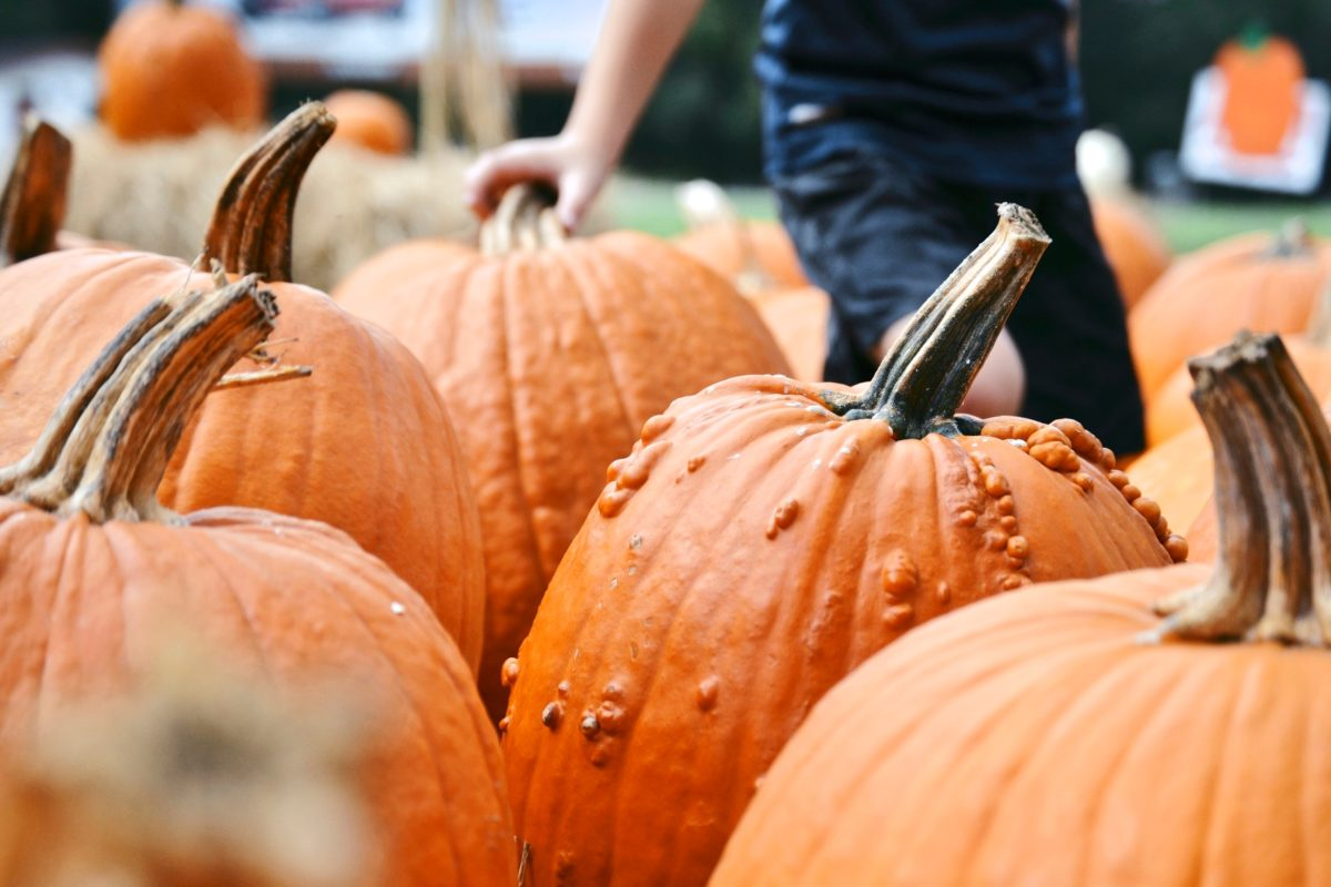 Where are the best places to go pumpkin picking this fall?