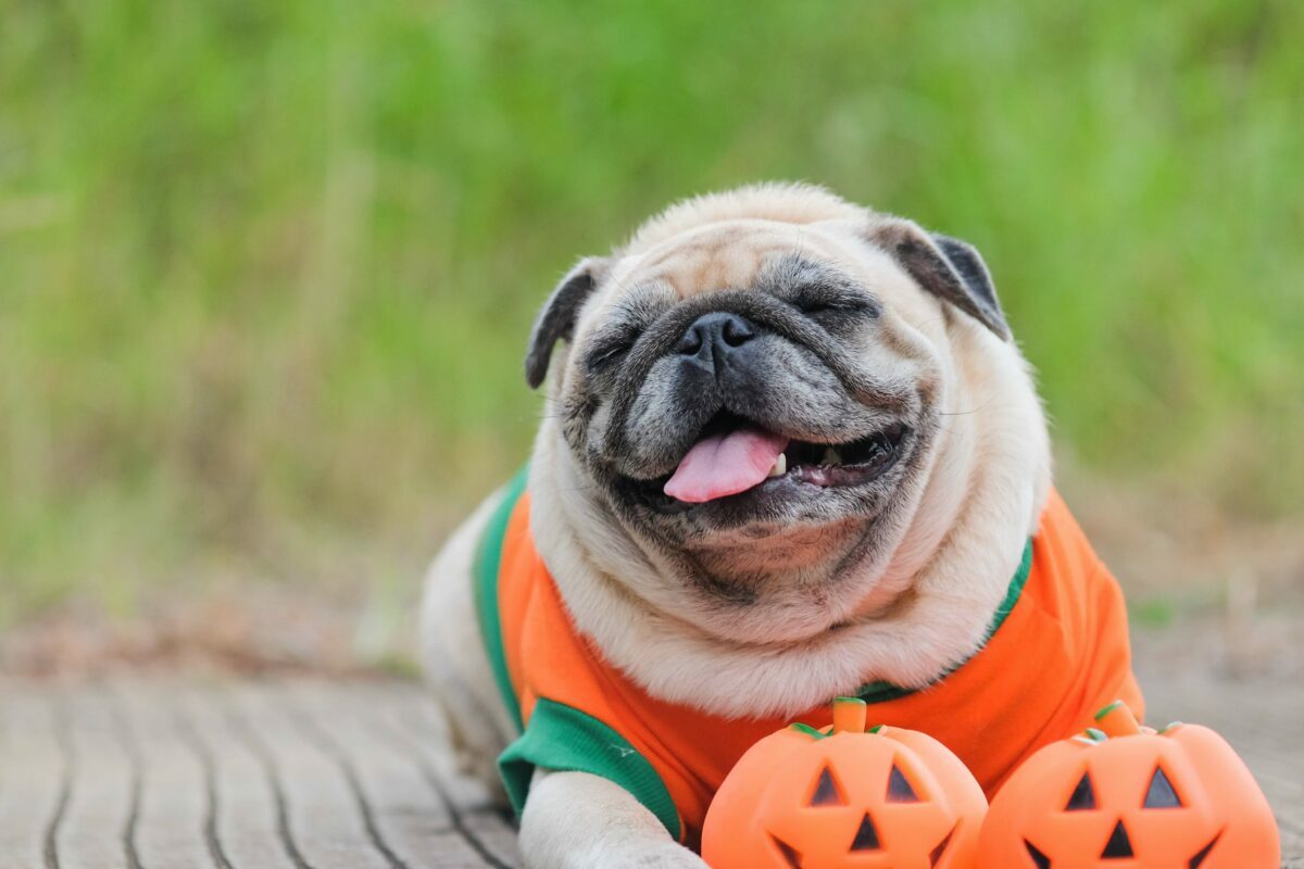 The best Halloween costumes for dogs of all sizes this year