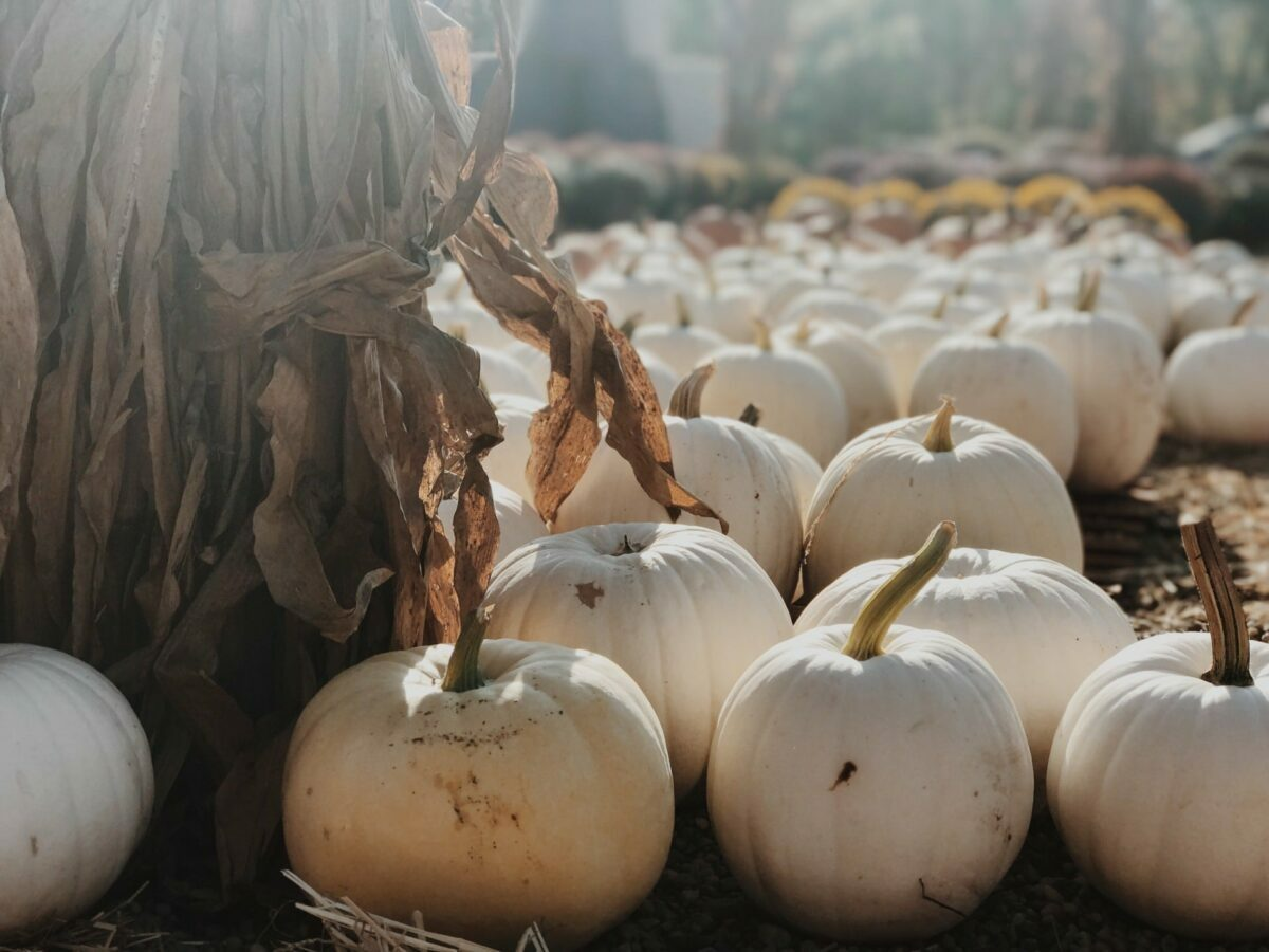 the best most beautiful and charming farms, orchards and pumpkin patches for families and friends to go picking this fall 2021.
